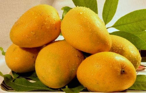 Mango health benefits tips