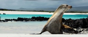 galapagos-wildlife