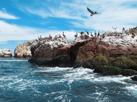 islas-ballestas-paracas