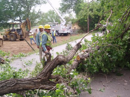 tree service, tree removal, tree pruning, tree pruning, Dallas, Plano, Richardson, Frisco, Addison, The Colony, Farmers Branch, Coppell, Irving, Garland, Carrollton, Lewisville, Grapevine, Flower Mound, Highland Park, University Park, Allen, and McKinney