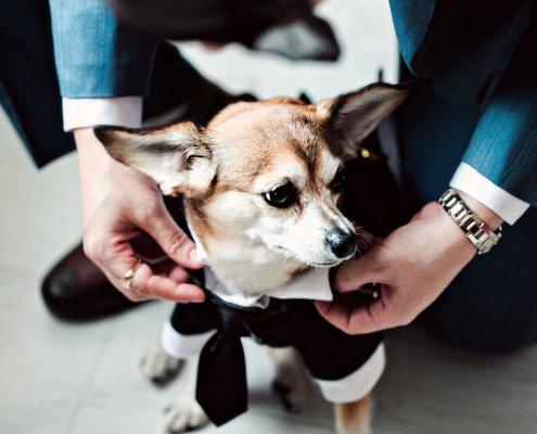 doggie - wedding at Helsinki