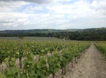 Exton Park Vineyard