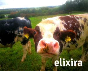 Hvilke tiltag har madindustrien gjort for at imødekomme danskerne stigende bevidsthed om sundhed og dyrevelfærd? Og hvorfor vælger flere at blive vegetarer og veganere? Læs mere her!