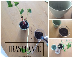 De semilla a planta