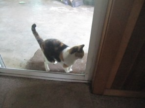 The cat at the door waiting for dad in the morning