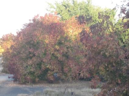 Ditto sunlight on trees