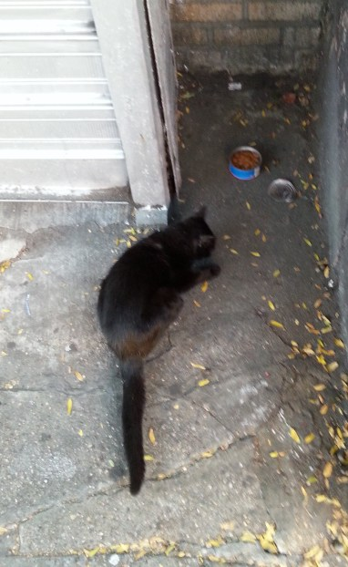 Little Black Utica Avenue Cat