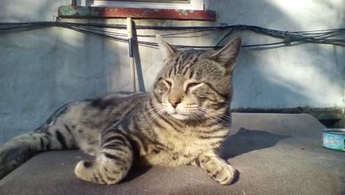 Genius Cat enjoys the sunshine, October 23. 2015
