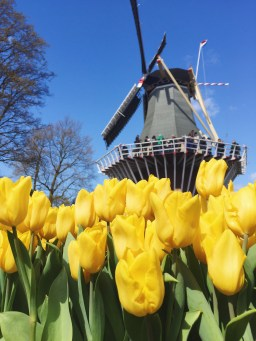 Could not have asked for a more perfect day at the tulip festival!