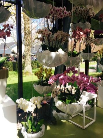 Fun orchid arrangements!