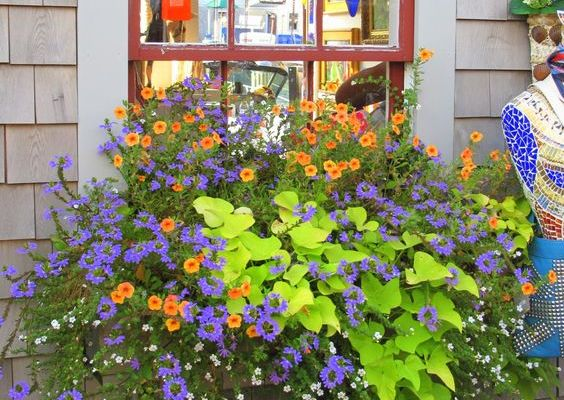 Beautiful Window Boxes and Pots full of Flowers!