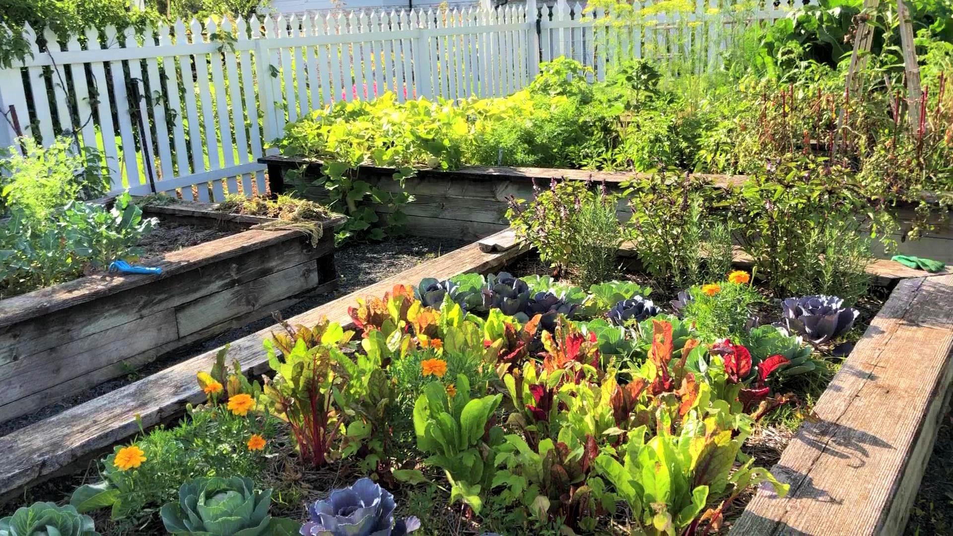 A Little Tour of Our Garden: Video