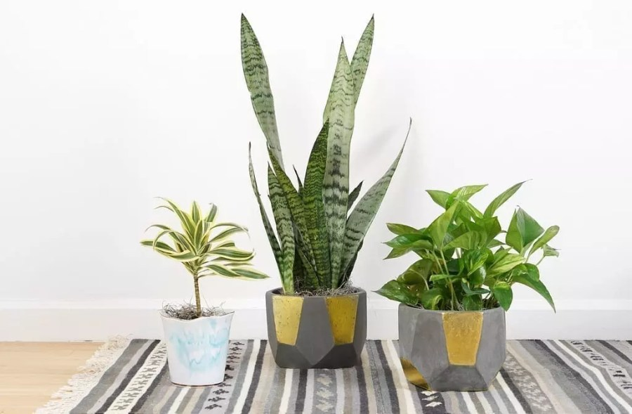 5+ Ways to Promote Relaxation At Home house plants houseplants