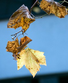 """The leaves they were withered and sere"""