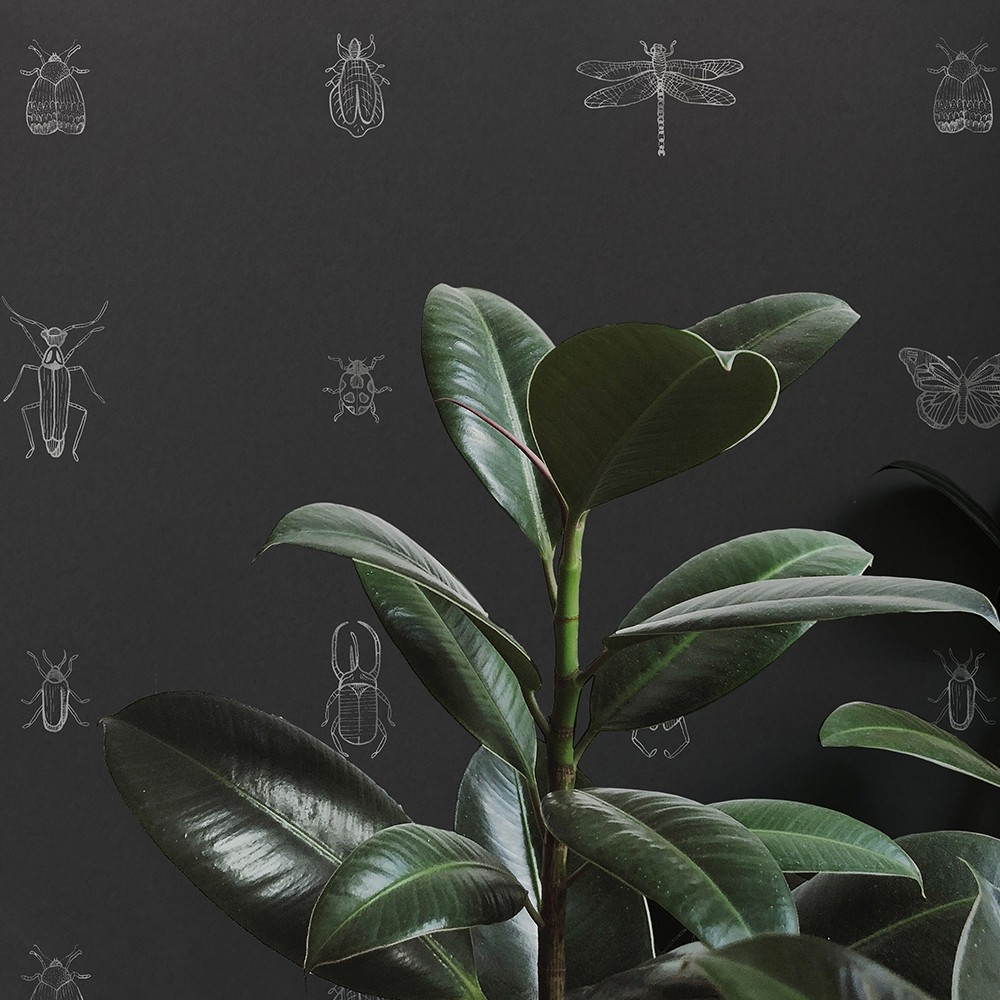 black-bugs-wallpaper-hand-drawn-lifestyle-image