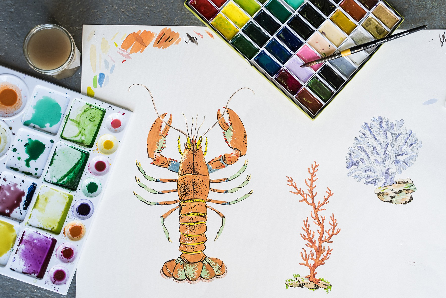 Image of Elizabeth Ockford's watercolour of the lobster and coral.