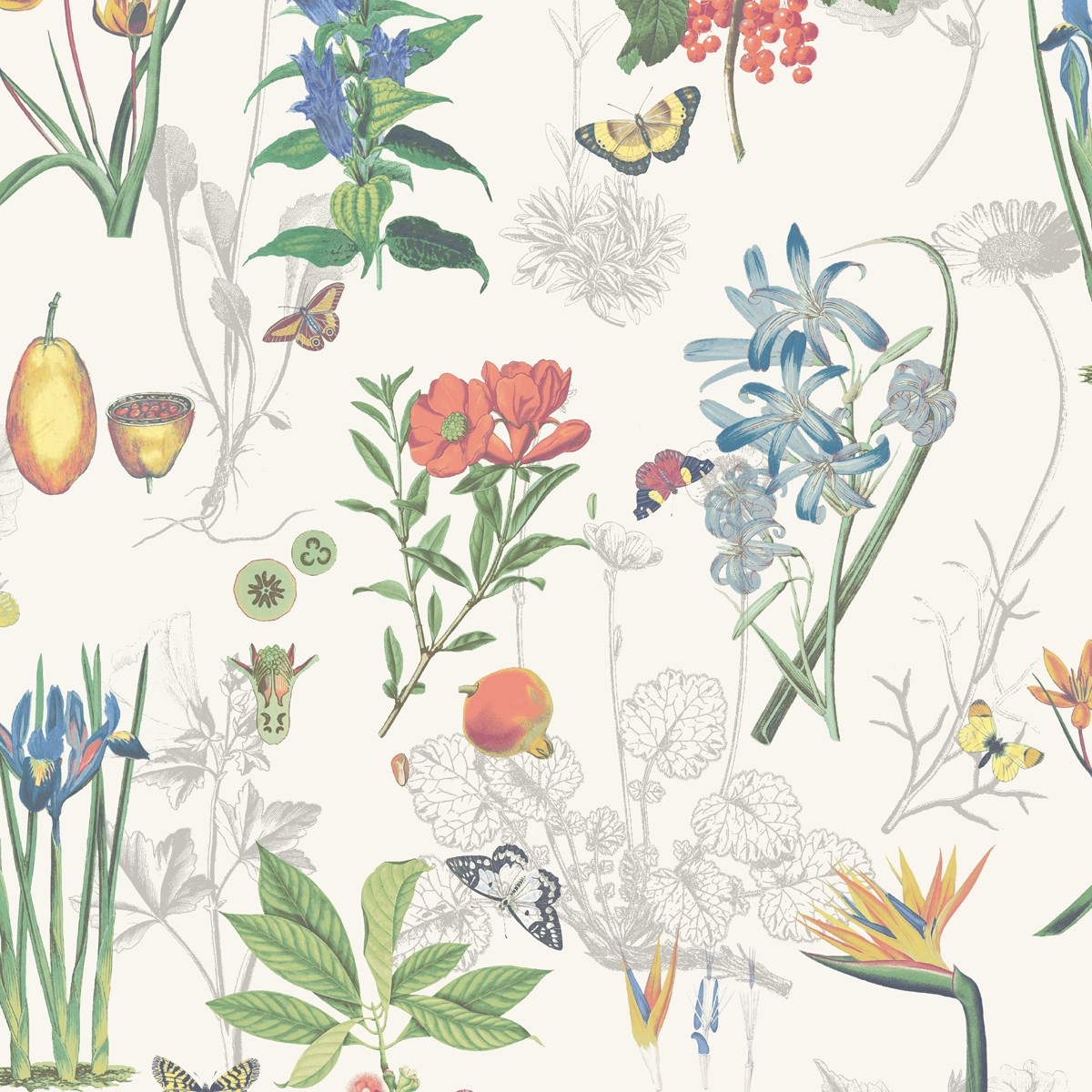 W-03021-Marianne-Botany