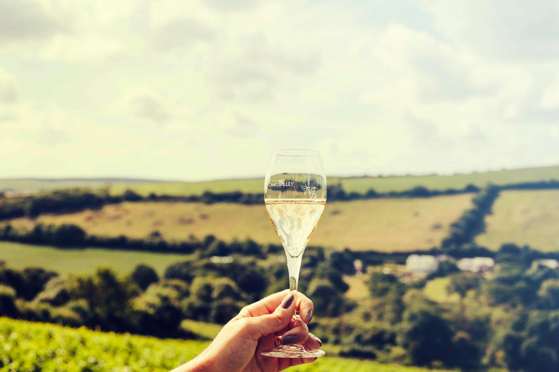 picnic wines