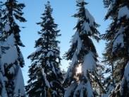 Cypress Snowy Trees 6