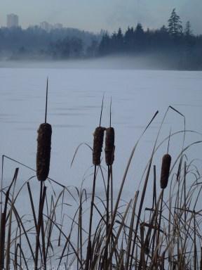 Deer Lake Park Winter 6