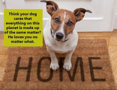 Dog Lesson 1