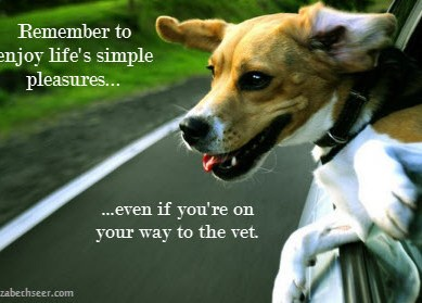 Dog Lesson 3: Enjoy the Simple Things