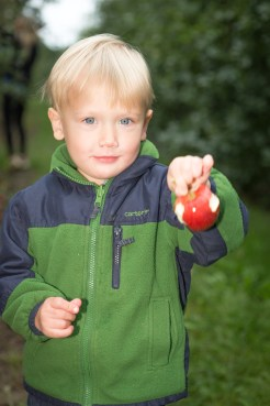 Apple PIcking-70