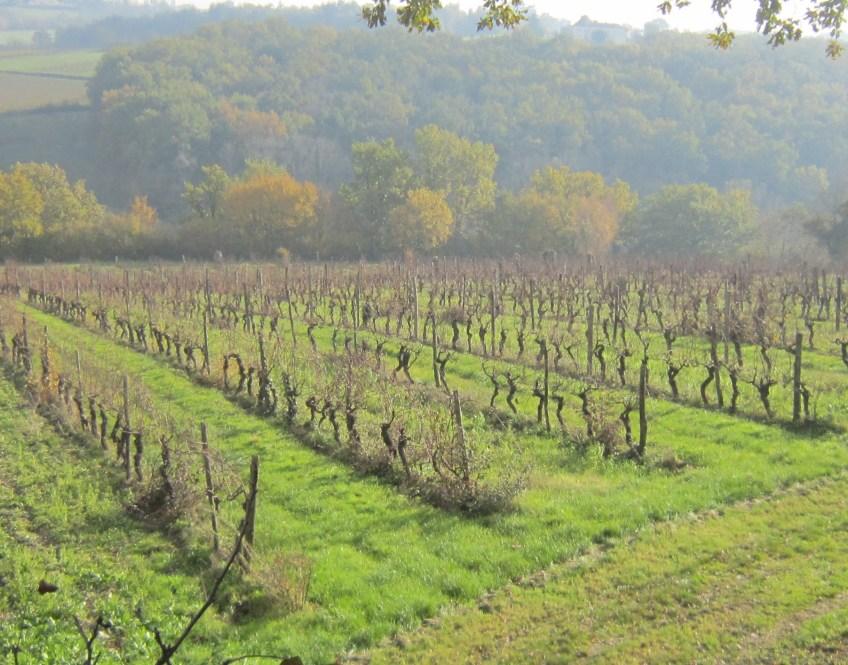 Autumn at Terroir Feely vineyards