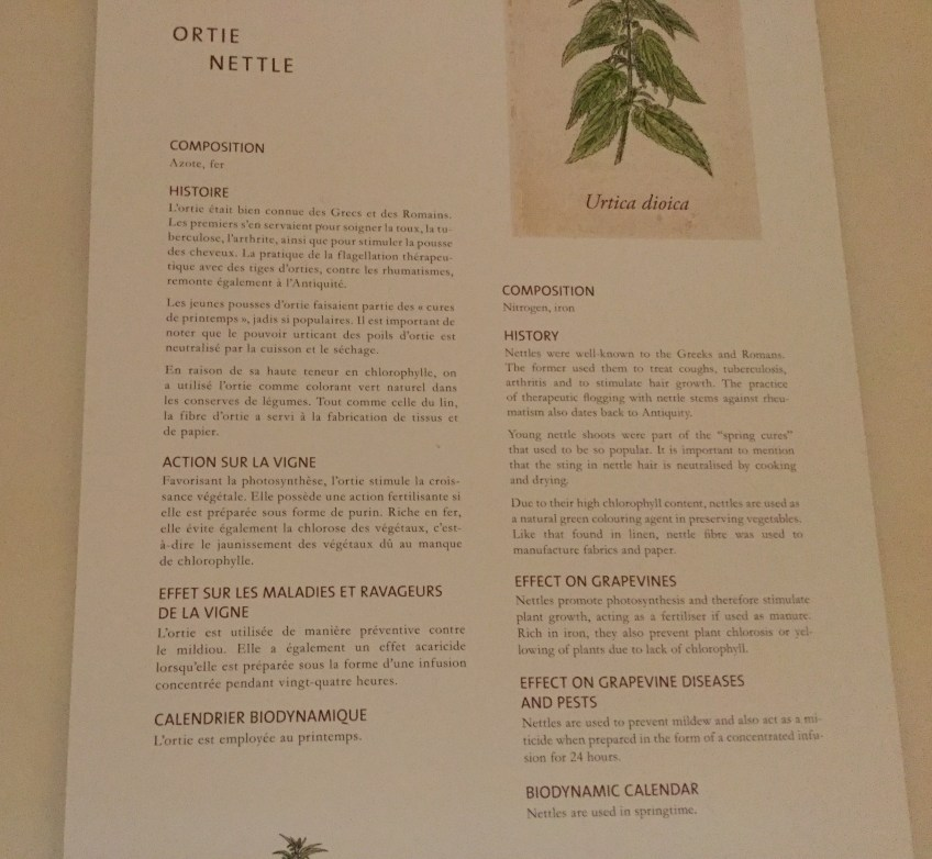 Nettle/Orte Description