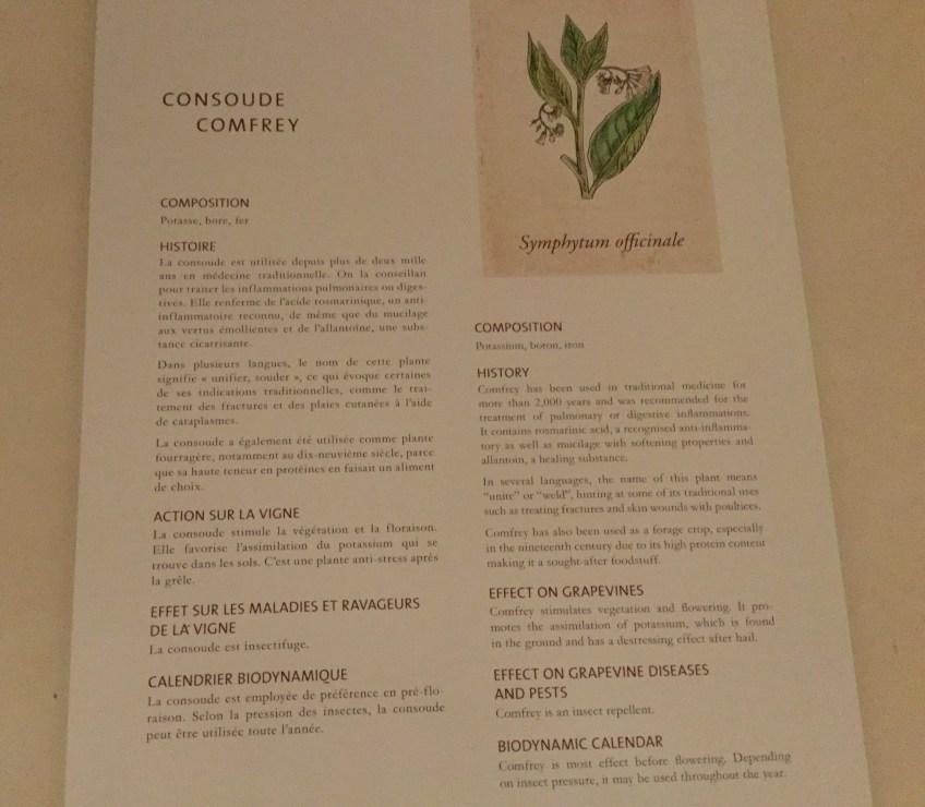 Comfrey/Consoude