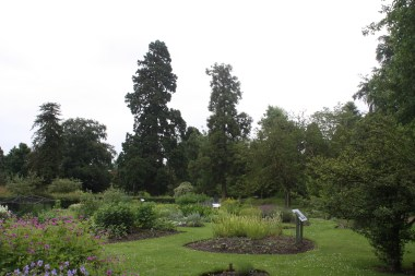 Some of the trees and flower beds.