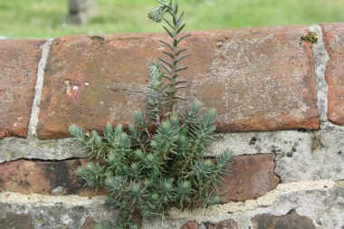 Another plant growing in the wall.