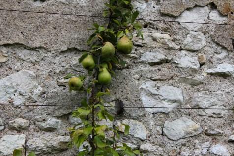 Pear Atelier