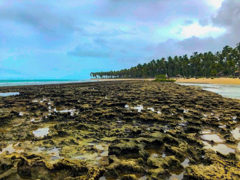 Recifes visíveis na maré baixa da Praia dos Carneiros, Tamandaré, Pernambuco