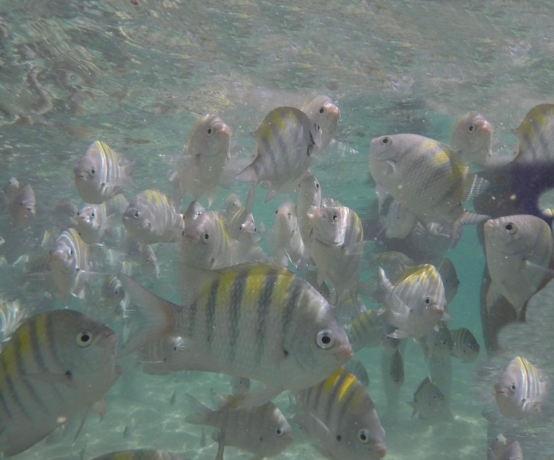 Peixes nas piscinas naturais da Rota Ecológica, Alagoas