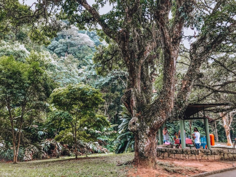 Se você tem dúvidas de onde fazer seu piquenique no Rio de Janeiro, RJ: Parque da Gávea ou Parque da Cidade é um dos melhores locais para um piquenique.