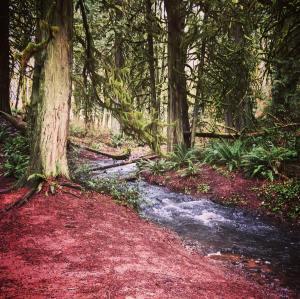 Lacamas Creek, Camas, Washington