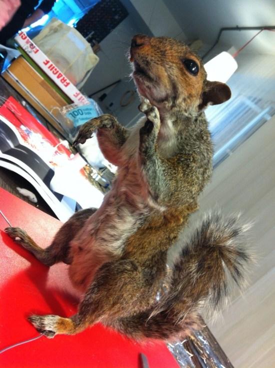 Squirrel Taxidermy in London