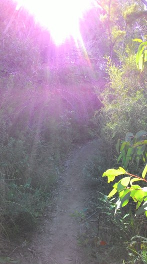 Early morning trail