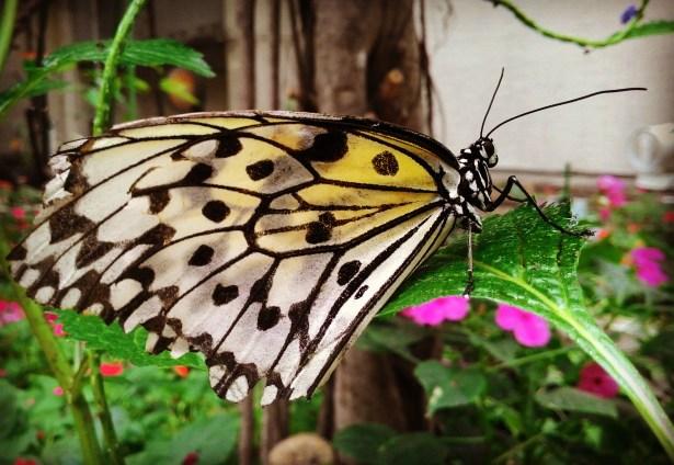 The insectarium