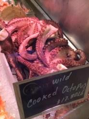 Wild Octopus!