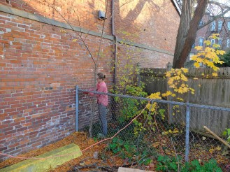 Under-utilized area behind fence with errant trees.