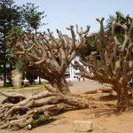 El Jadida : Le parc Mohammed V renaîtra-t-il de ses cendres ?
