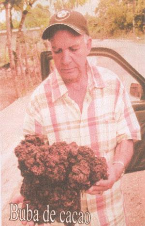 El ingeniero agrónomo Amable Pérez Martínez, muestra la Buba del Cacao.