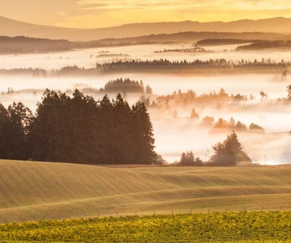 Five Mountain Vineyard Sunrise