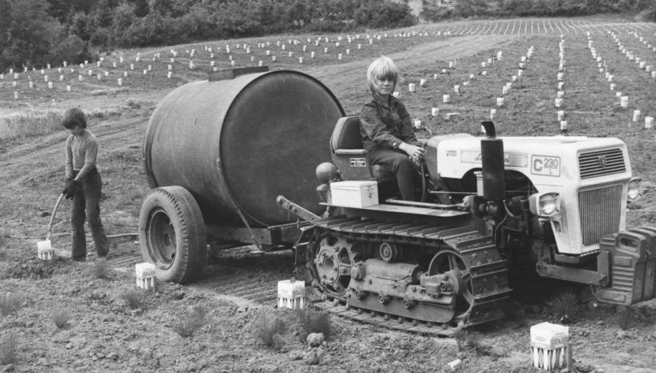 Klas and Fredrik Campbell watering young vines with crawler tractor, 1974