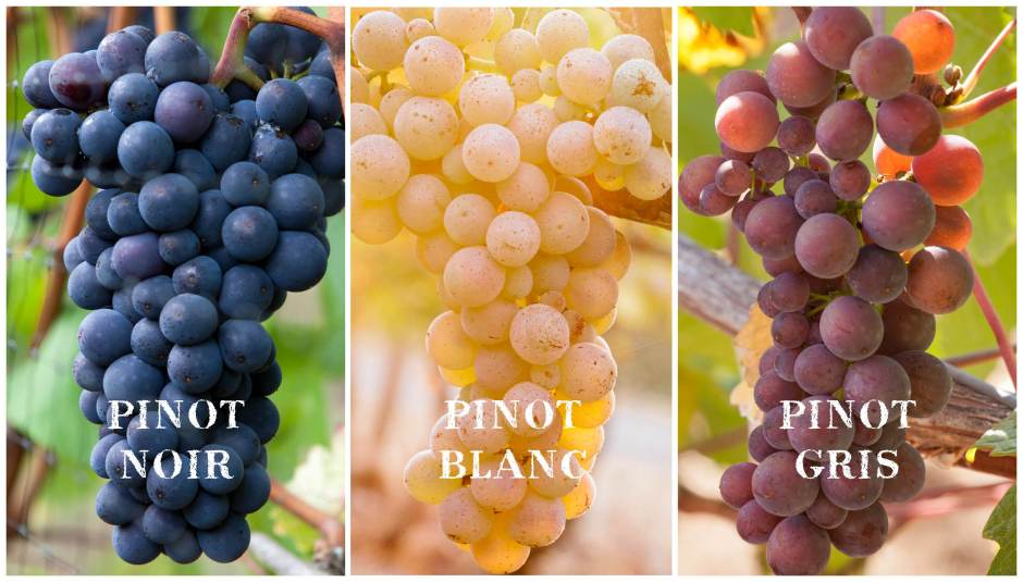 Pinot Noir, Pinot Blanc and Pinot Gris
