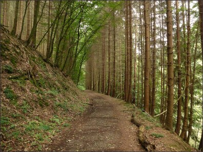 Waldschluchtenpfad (47)