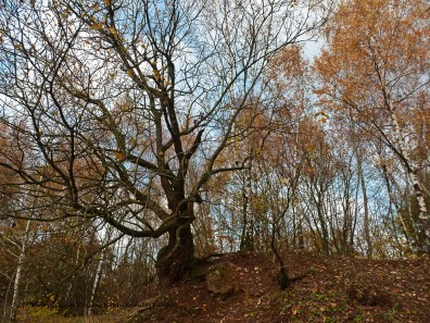 Gruiten_Neanderlandsteig (118)