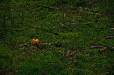 Äpfel für das Wild so nahe an der Straße ausgelegt ist eine Gefahr für Mensch und Tier.